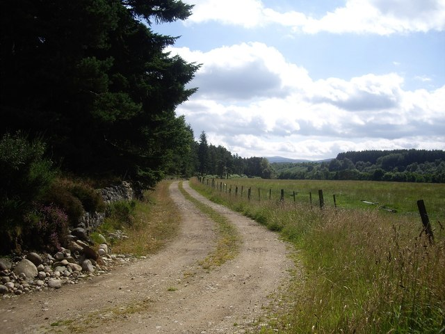 Track along west edge of Carlogie Wood