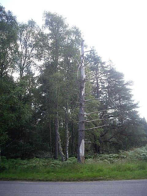 Dead tree by B993