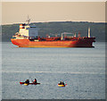 J5083 : 'Summer' in Belfast Lough by Rossographer