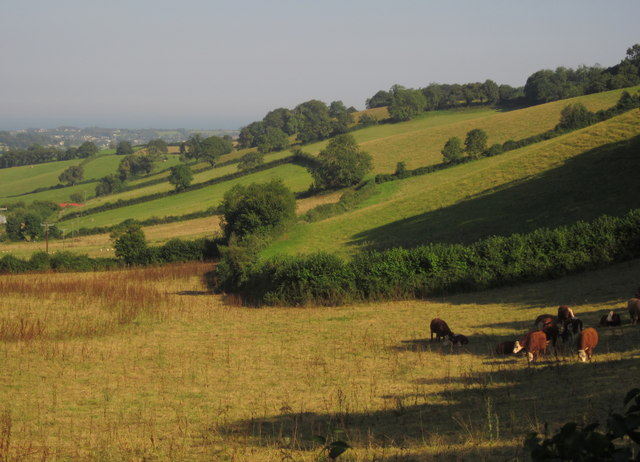 Valley near Mamhead Grange