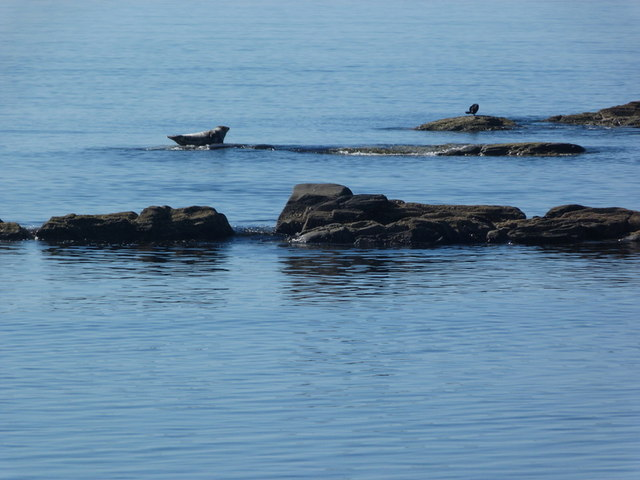 Seal and cormorant near Putechan