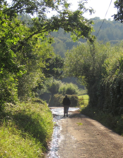 Lane to Ashcombe