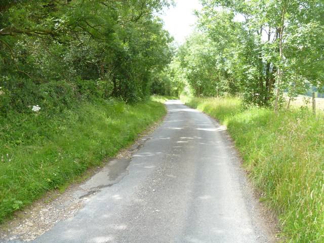 Road by the wood
