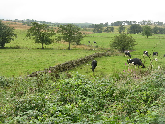 Pastures at Craigend