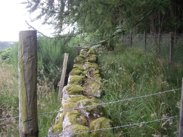 Boundary wall of Ord Fundlie Wood