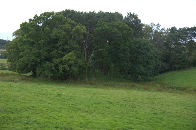 Woodland beside the Gormack Burn, Peterculter