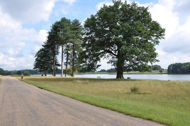 Tatton Park, Driveway, Trees and Tatton Mere