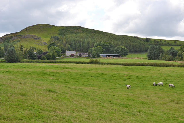 Fields east of Cefn Lech farm