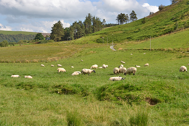 Sheep on the valley floor