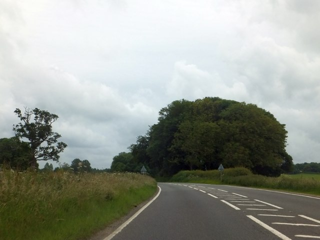 Copse beside A31 south of Almer