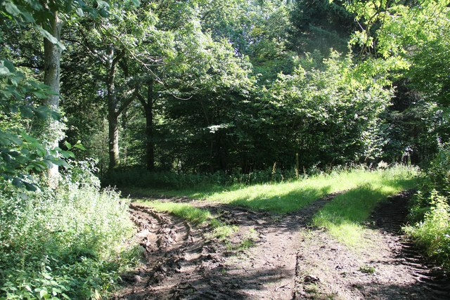 Forestry track entering Chedworth Woods