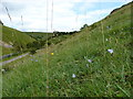 SK2055 : Wildflower meadow on the hillside by Richard Law