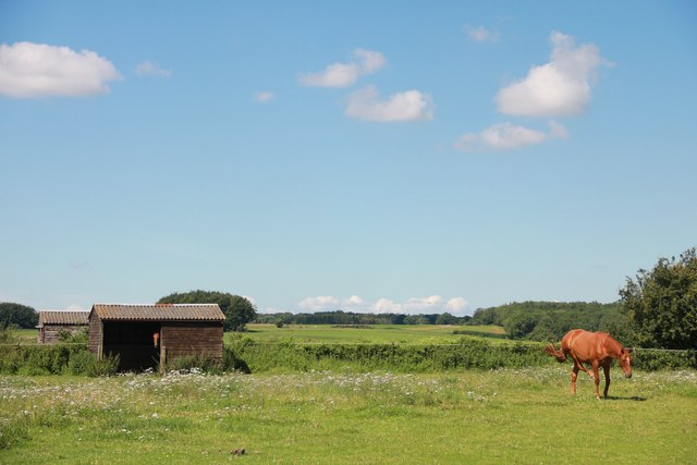 Horses in paddock north of Chedworth