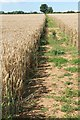 SP0612 : Path through crops by Terry Jacombs