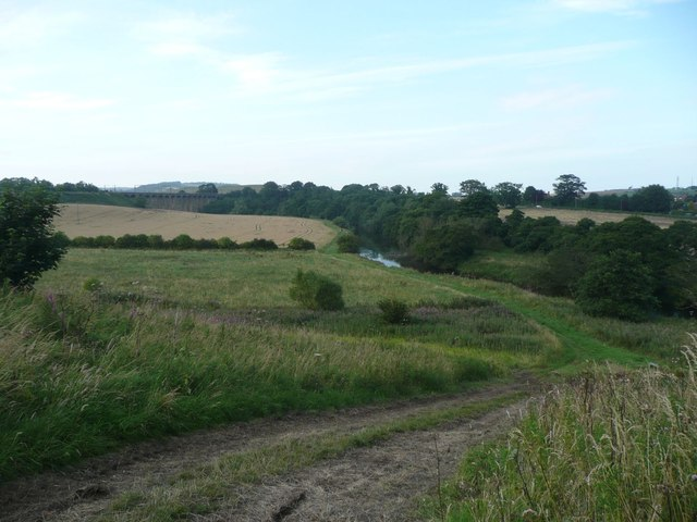 Rough grazing beside the River Aln
