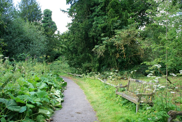 Path and bench
