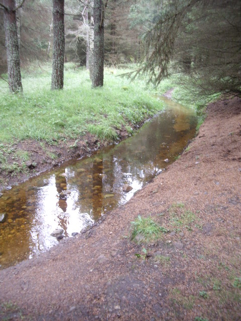 A drain through Bell Wood