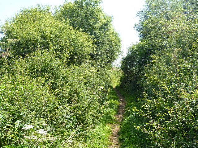 Overgrown track [1]