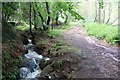 NJ6924 : Stream and track, Farquharson Wood by Bob Embleton