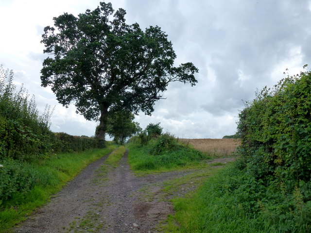Bridleway to Preston-on-Wye 2