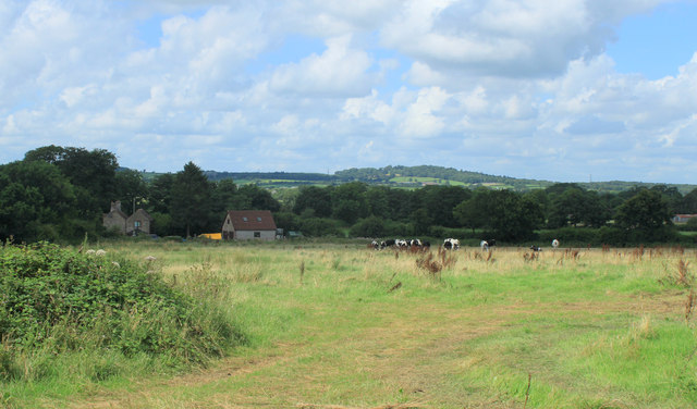 2012 : Holt Farm with herd