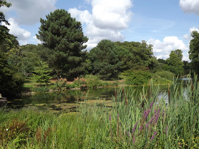 The Lake, Kew Gardens