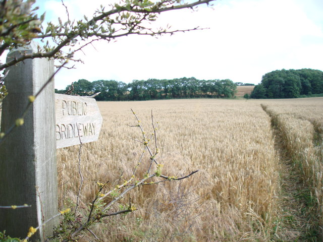 Flotmanby Wold from Manor Farm