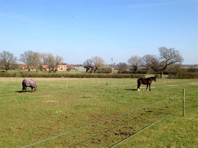 View across a paddock to Fosters Farm