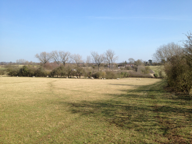 Sheep pasture in early spring