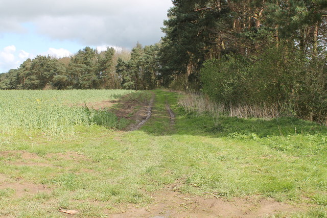 Farm Track at edge of Holywell Plantation