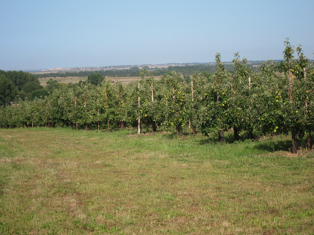 Orchard by Chapel Lane