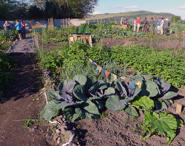 Cromarty Allotments