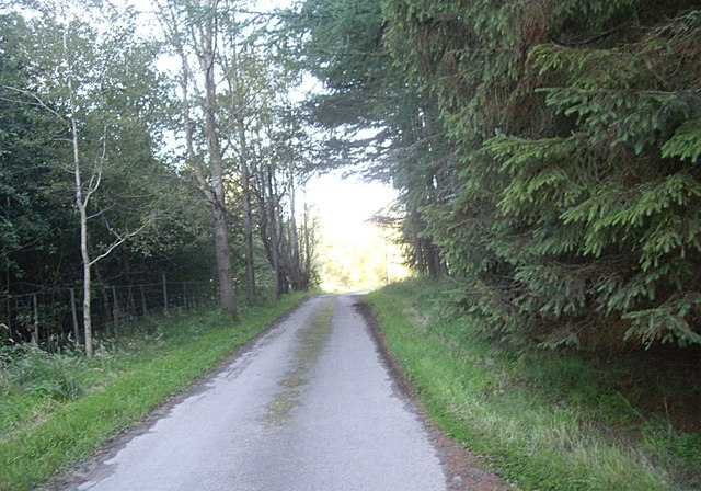 Minor road through the wood