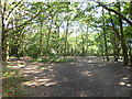 TQ3170 : Streatham Common, woodland by Mike Faherty