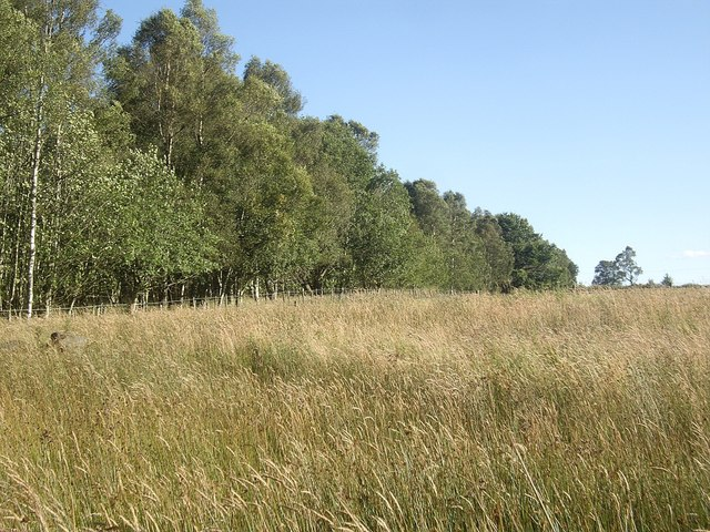 Woodland edge at Drumgesk