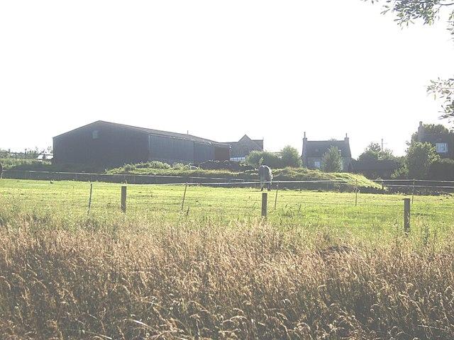 Horse paddock at Drumgesk Farm