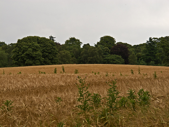 Farmland near Peterhead