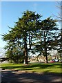 SU3814 : Trees in the grounds of the former Ordnance Survey HQ, Southampton by Alexander P Kapp