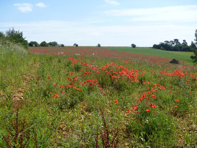 Red field, green field
