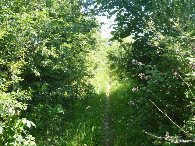 Overgrown track [2]