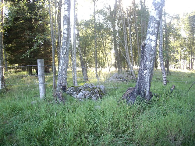Stone piles at woodland edge