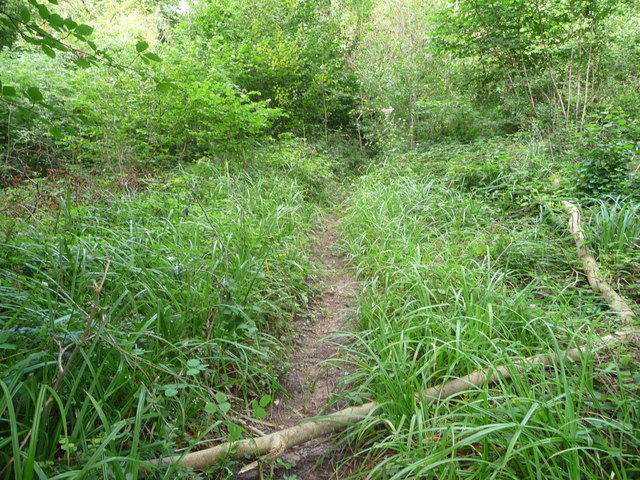Path in Worgan's Wood below Offa's Dyke