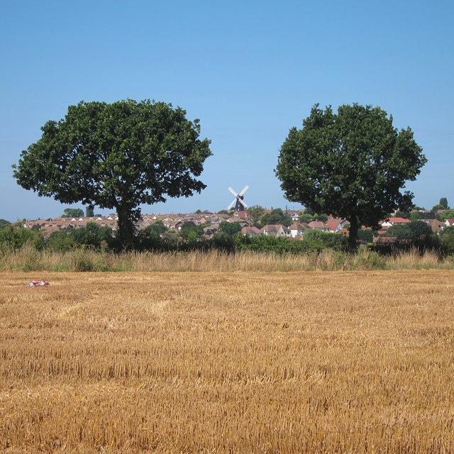 Trees near Ridgeway Farm