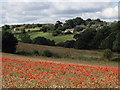 SK4463 : Wheat field with poppies, and view to Astwith by Andrew Hill