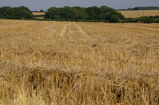 Oilseed Rape Stubble Field on Wootton Wold