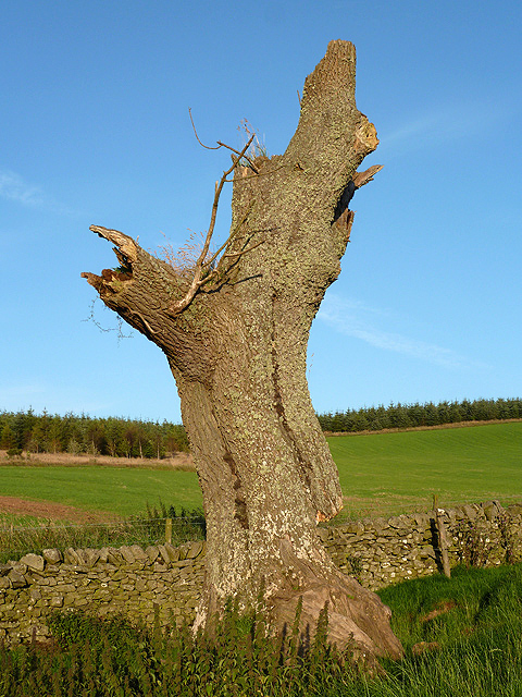 A decaying tree
