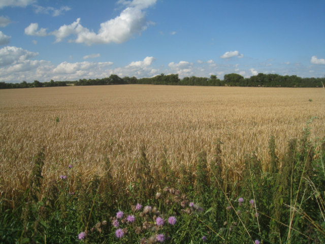 Field known as The Heath (30 acres)