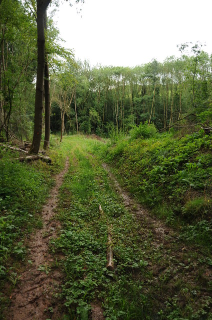 Bridleway through Slashes Coppice
