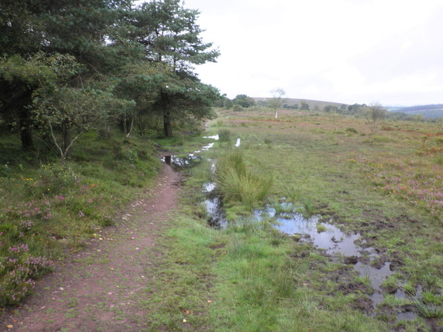 Wet track, on Haddon Hill