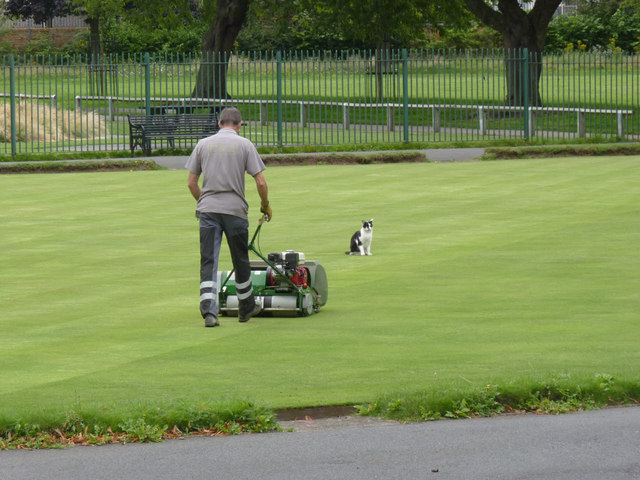Mog and mower